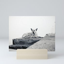 Greek beach dog Mini Art Print
