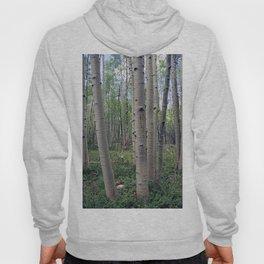 Spring Aspen Forest Hoody