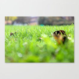 Ant's View: Grass Canvas Print