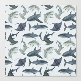 Sharks. Sea background Canvas Print