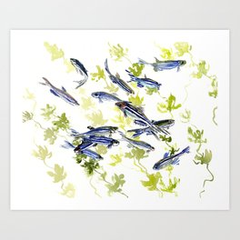 Fish Blue green fish design zebra fish, Danio aquarium Aquatic design underwater scene Art Print