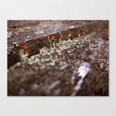 Martian Moss Canvas Print