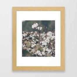 Cotton Field 8 Framed Art Print