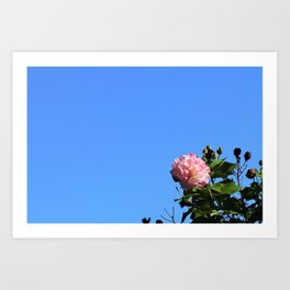 Flower in the Sky Art Print