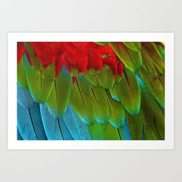 Catalina Macaw Feathers Art Print