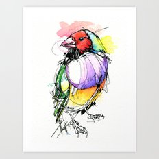 Red Lady Gouldian Finch Art Print