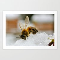 Honey Bee on Snow Art Print