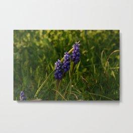 Purple flower trio Metal Print