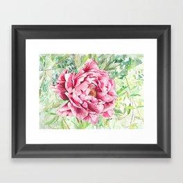 Peonie Framed Art Print