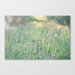 Sunlit Canvas Print
