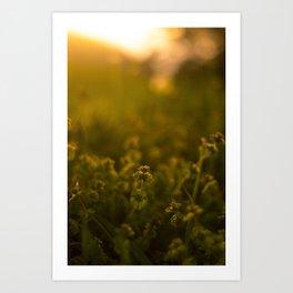 Dreamy Fields Art Print