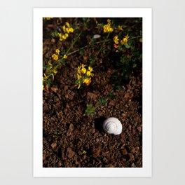 Baja: Seashell in the Mountains Art Print