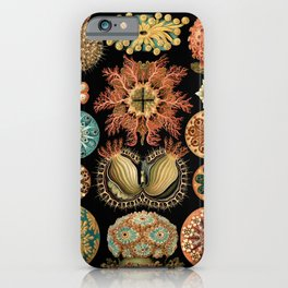 Sea Life Illustrations by Ernst Haeckel, 1904 iPhone Case