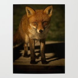 The Wild Red Fox Poster