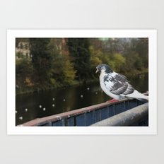 Pigeon by Canal Art Print