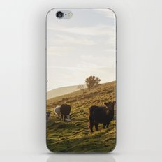 Cattle grazing on mountainside. Derbyshire, UK. iPhone Skin
