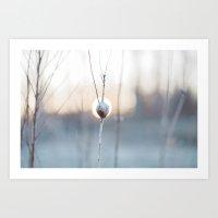 Goldenrod In Morning Light Art Print