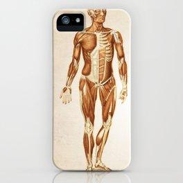 Muscular System Human Anatomy Art Print iPhone Case