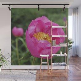 Peony Firelight - glowing pink petals Wall Mural
