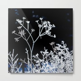 Frosted plant at cold winter day on black background Metal Print