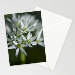 The beauty of the white Stationery Cards