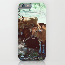 Gili Cows iPhone Case