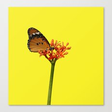 African Monarch Canvas Print
