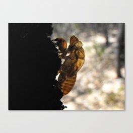 Cicada Ghost Canvas Print