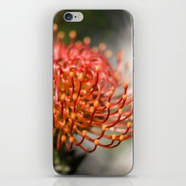 Exotic Pin Cushion Protea Flower- Botanical Photography #Society6 iPhone Skin