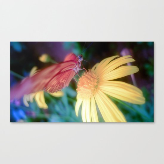 hungry butterfly Canvas Print
