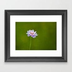 Pincushion Flower Framed Art Print