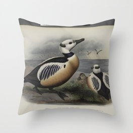 321 Eniconetta Stelleri. Stellers Duck Throw Pillow