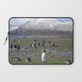 King Penguin Colony Laptop Sleeve