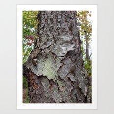 OLD BARK (Whiting Road Nature Preserve, Webster, NY) Art Print