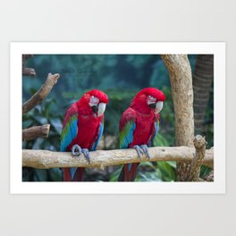 Macaws on a Branch Art Print