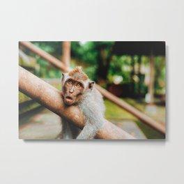 Cute Monkey (Color) Metal Print