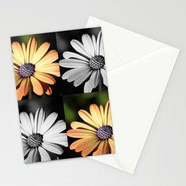 Osteospermum multicoloured Stationery Cards
