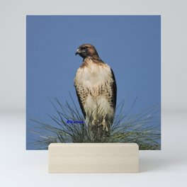 Red-Tailed Hawk on Watch at Foothill and B Street Mini Art Print