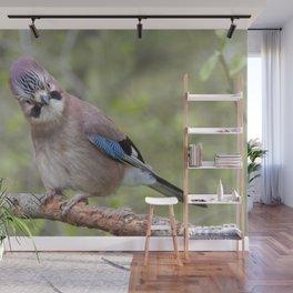 Shy colourful Jay bird Wall Mural