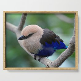 Blue Bellied Roller Serving Tray