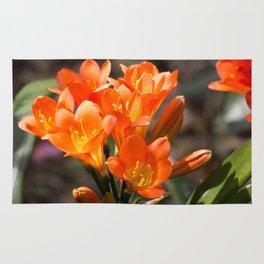 Bright Orange Clivia Rug