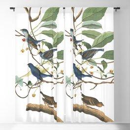 Indigo bird, Birds of America, Audubon Plate 74 Blackout Curtain