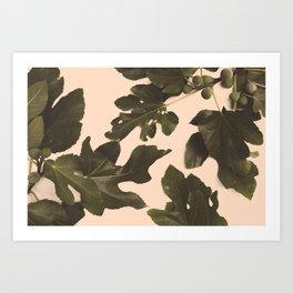 Botanical II - Day Art Print