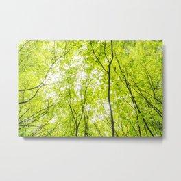 Wild nature parks VI - Nature Fine Art photography Metal Print