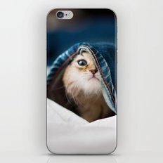 Sweet cat iPhone & iPod Skin