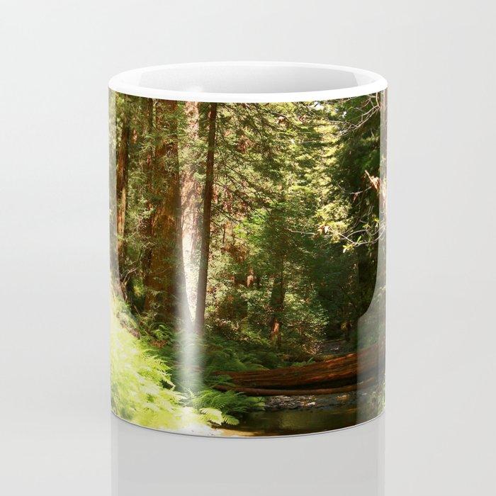 A Muir Woods Scene Coffee Mug