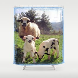 Ewe and Twin Spring Lambs Shower Curtain
