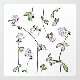 Trifolium Pratense Art Print