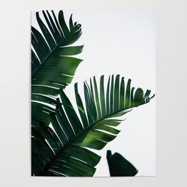 Palm Leaves 16 Poster