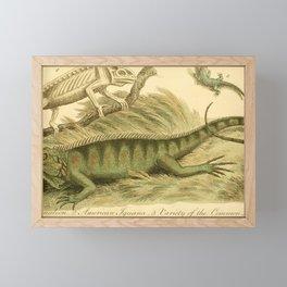 Vintage Print - Bullock's London Museum & Pantherion (1812) - Chameleon; Iguana; Common Lizard Framed Mini Art Print